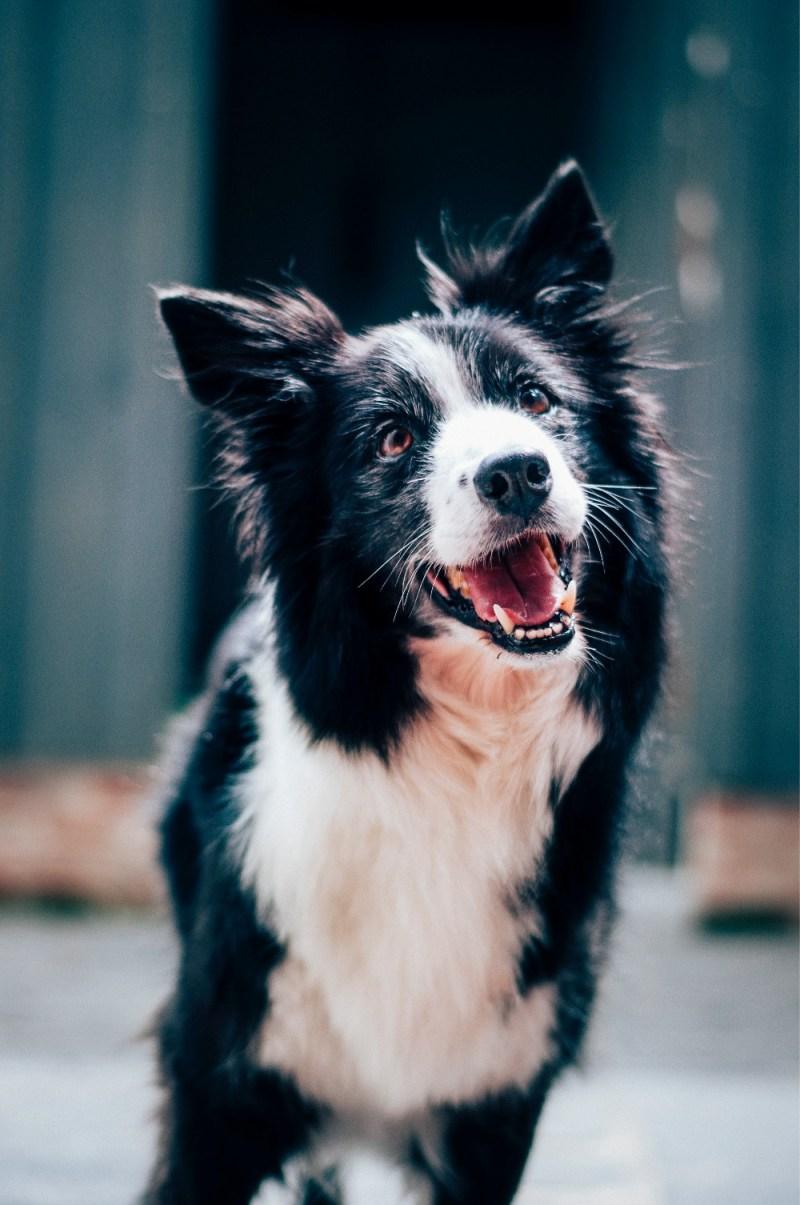 orthopedic dog bed choose