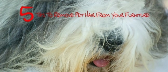 pet hair cover