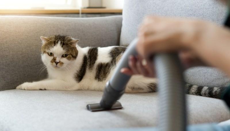 cat pet hair
