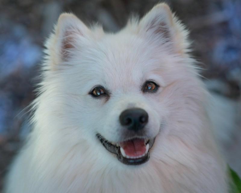 pet insurance policy teeth