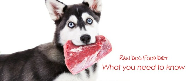 raw dog food cover