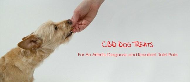 CBD dog treats cover