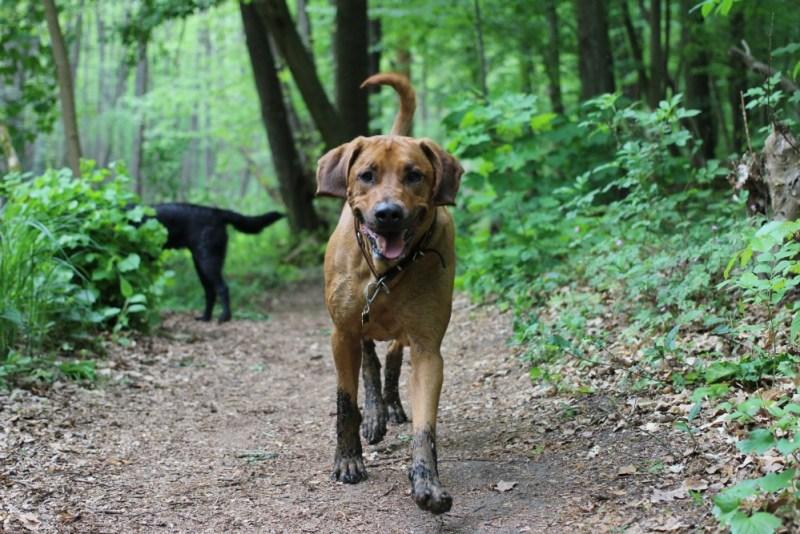 dog walking in mud