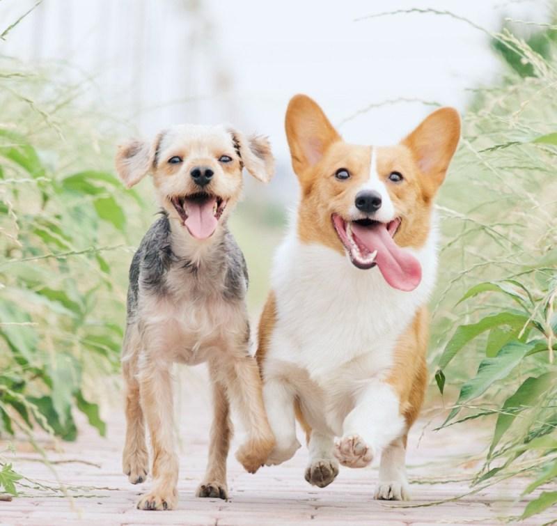 dog's health play