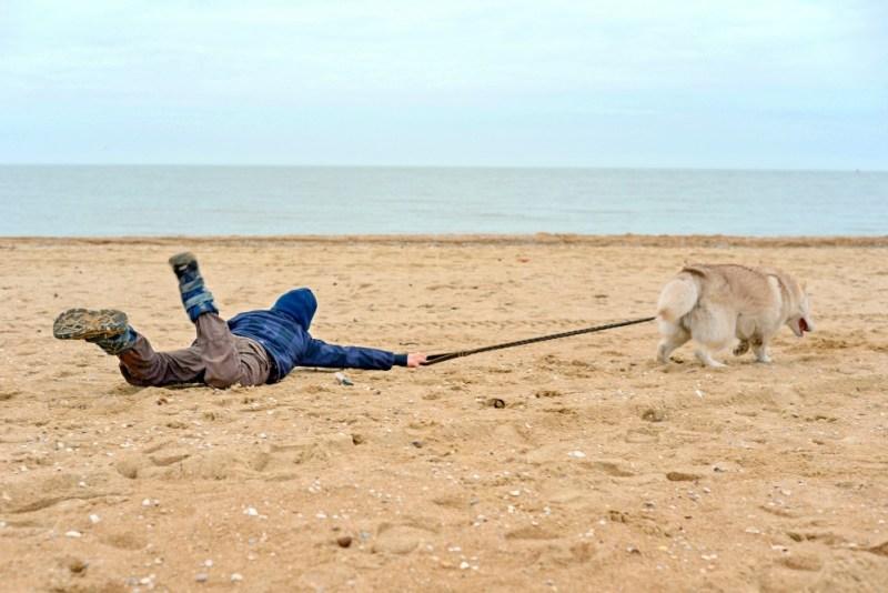 dog leash choices