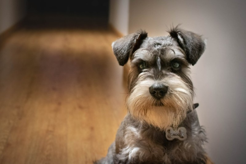 dog insurance ideas for pets