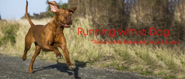 running with a dog cover