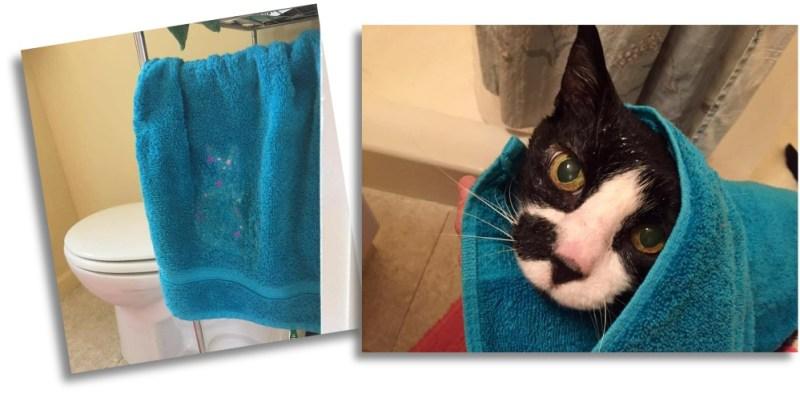 cat in a towel