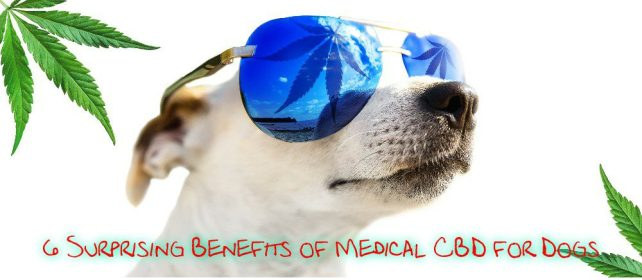 cbd benefits cover