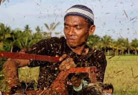 A common  farmer in the Philippines