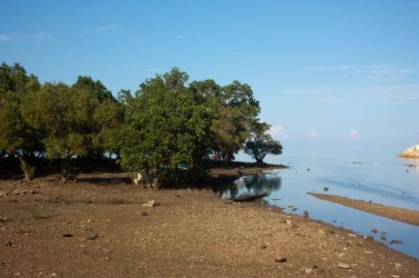 Mangrove Rehabilitation