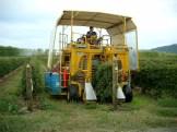 Harvesting 2002