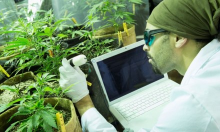 Canada, Cannabis Jobs Abound But Workers Hard To Find