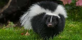 Neighbors Says Drying Hemp  Smells Like A Skunk ..