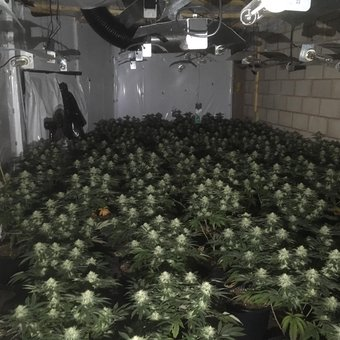 UK Police Find Weed Factory In  Hinckley Leicestershire
