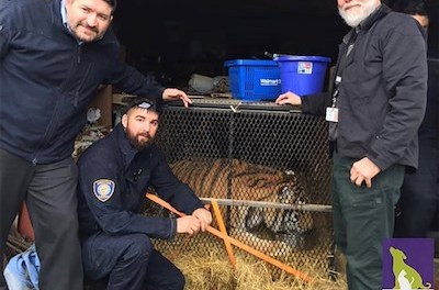 Whoah … WTF !!! Texas Man Enters Abandoned House To Smoke Some Weed – Stumbles Into A Tiger