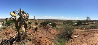 Australia: Kalgoorlie man high on San Pedro cactus jailed for assault, prompting warning from AMA