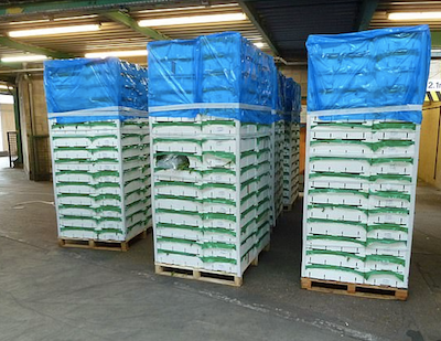 UK Border Force officers find £3million worth of cannabis hidden in a lorry supposedly packed with crates of Parsley
