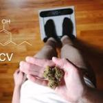 THCV: The Cannabinoid That Can Help With Weight Loss