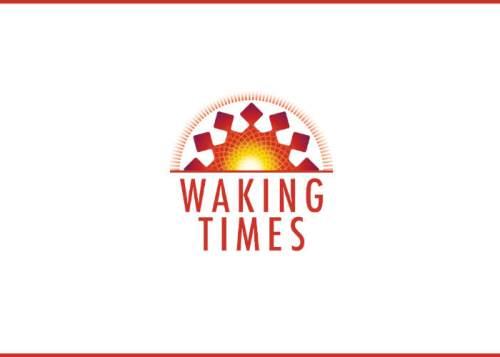 nwo-11-us-food-stamp-participants2