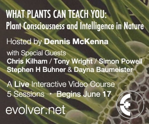 What Plants Can Teach You 300x250