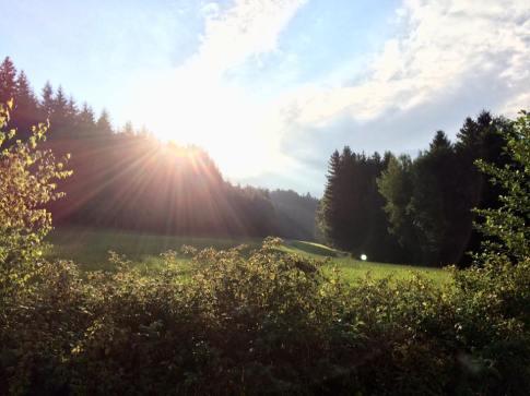 Wald Kobel Lohnsburg Kobernaußerwald Ferienwohnung