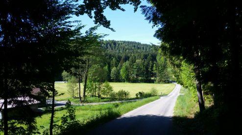 Wald Kobel Einfahrt links rein