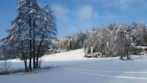 Wald Kobel Nebenwiese