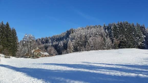Wald Kobel Umgebung vorm Haus