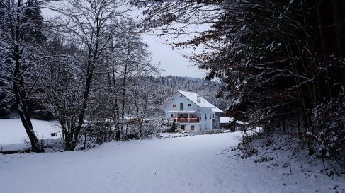 Wald Kobel 2 Tage vor Heiligabend