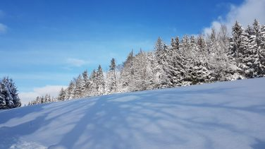 Wald Kobel Umgebung