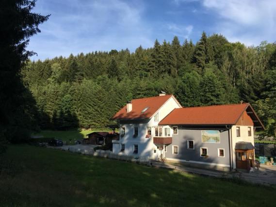 Wald Kobel