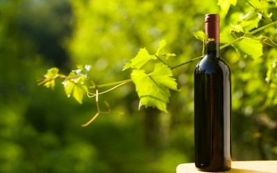 Outdoor shot of a bottle of red wine taken in the vineyard