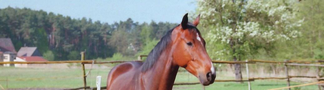 Das Pferd Pablo freut sich über besuch