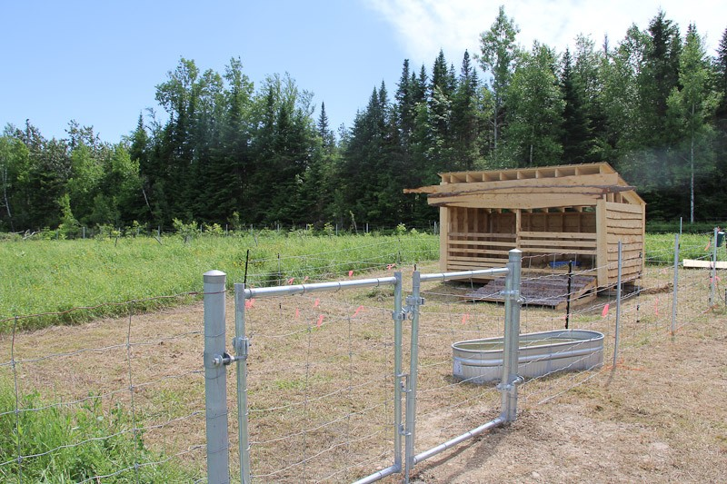 three sided animal shelter suitable for pigs
