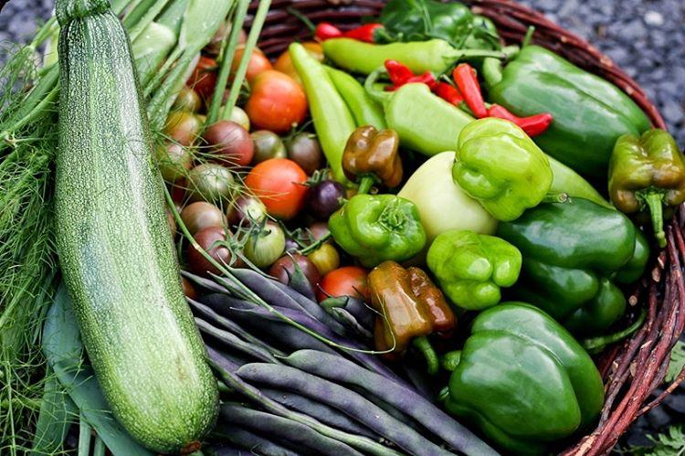 The Benefits of Growing Short Season Heirloom Vegetables in Your Garden