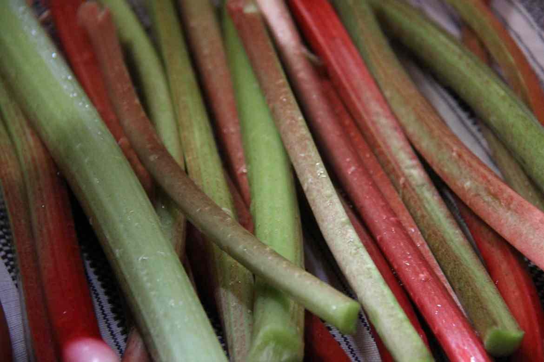 Rhubarb: Planting, Growing, Harvesting & Using