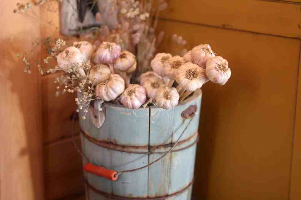 10 Rustic Country Kitchen Décor Ideas for Your Homestead - Garlic in an old wooden water bucket makes a pretty display.