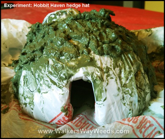 Papercrete Hobbit House Hedge-front