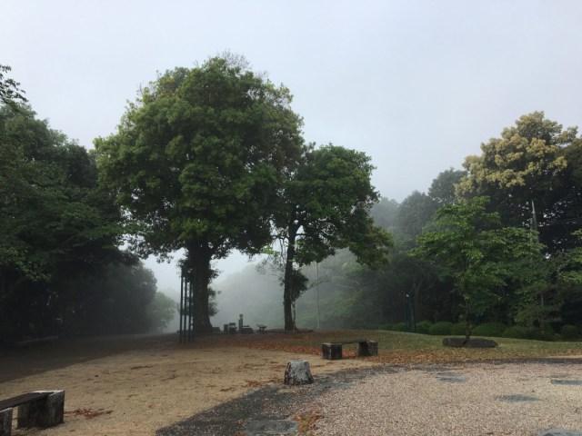 Trees in light fog near Kintai Castle in Iwakuni, Japan