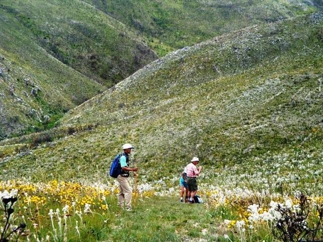 Hottentots Holland Nature Reserve Hike