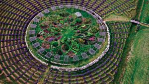 An aerial photo of a labyrinth made of lavender bushes and other colorful plants.