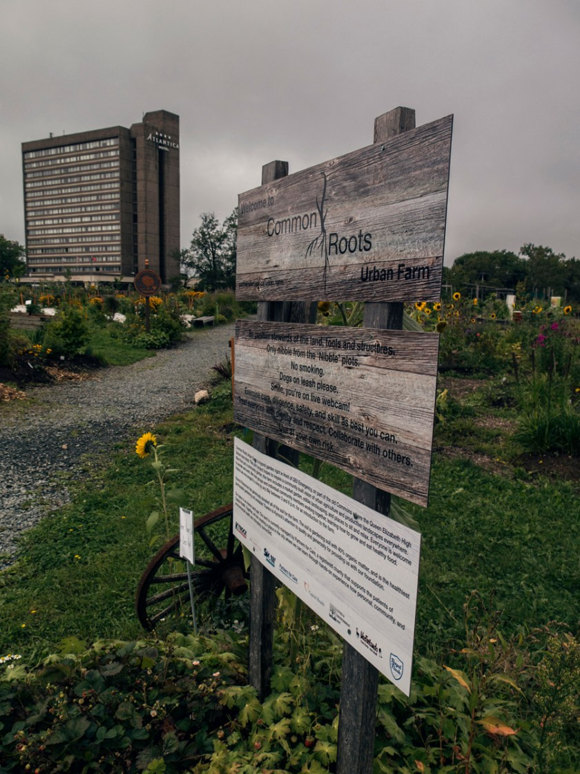 Community gardens at Halifax general hospital