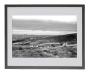 Sheep on Burley Moor, Yorkshire in Black Frame