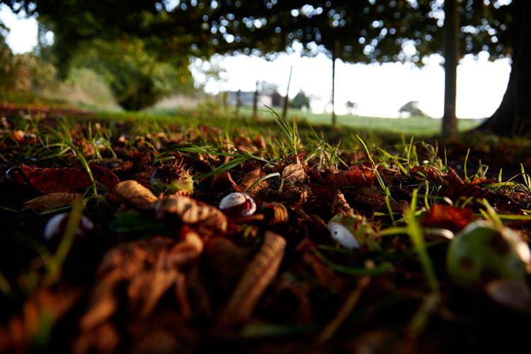 autumn leaves on woodland floor