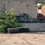 Plants spurt the concrete floor
