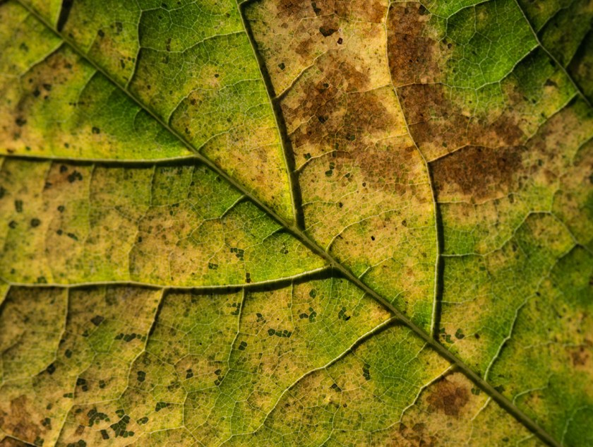 Autumn Leaf Close Up