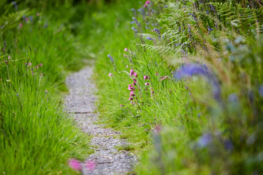 Green grassy woodland footpath in the summer in Threave