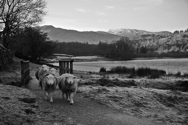 Grasmere walk, wordsworth