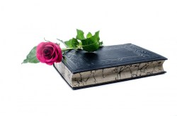 A rose and a book